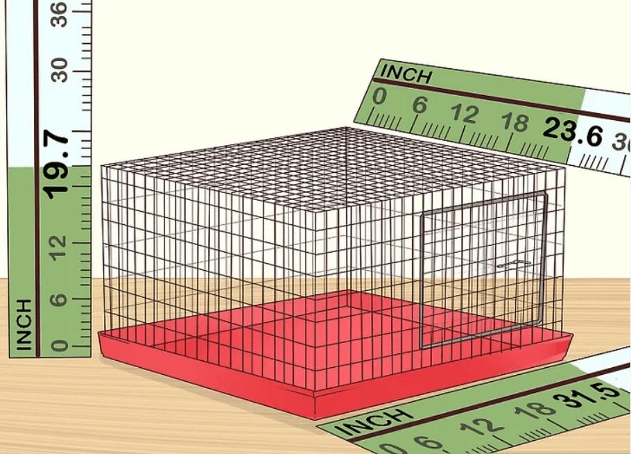 1- Muhabbet Kuşu Bakımı ve Eğitimi