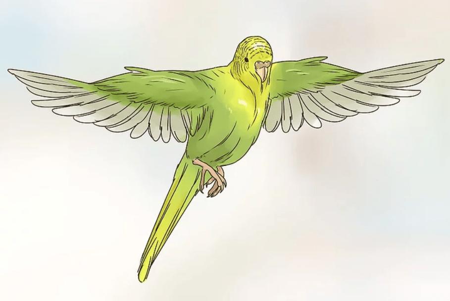 16-Uçma