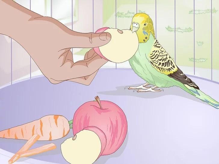 Muhabbet Kuşu Nasıl Beslenir 3