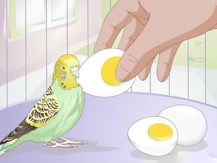 Muhabbet Kuşu Nasıl Beslenir 5