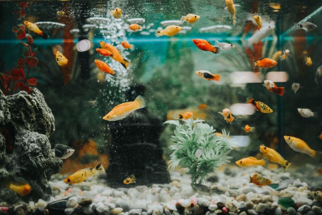 Akvaryumdaki balıklar neden ölürler